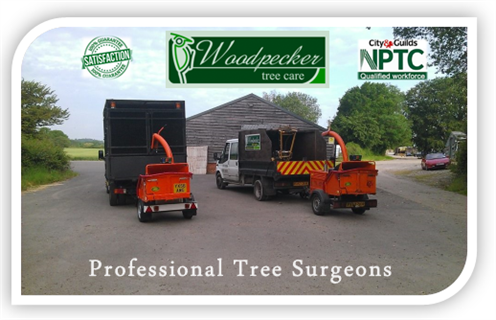Woodpecker Tree Care Hampshire
